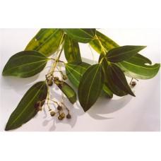 Cinnamon Bark / Leaf Oil
