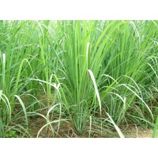 Lemongrass Oil (Cymbopogon flexuosus) Rev 2018