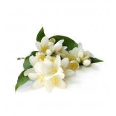 Jasmine grandiflorum Oil